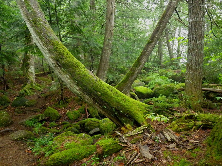 Maine's 100-Mile Wilderness includes a section of the Appalachian Trail beginning in Monson and ending at Abol Bridge just south of Baxter State Park. Surrounded by tracts of public and private land, it is famous for its remoteness. <em>Photo by Steve Rincavage </em>