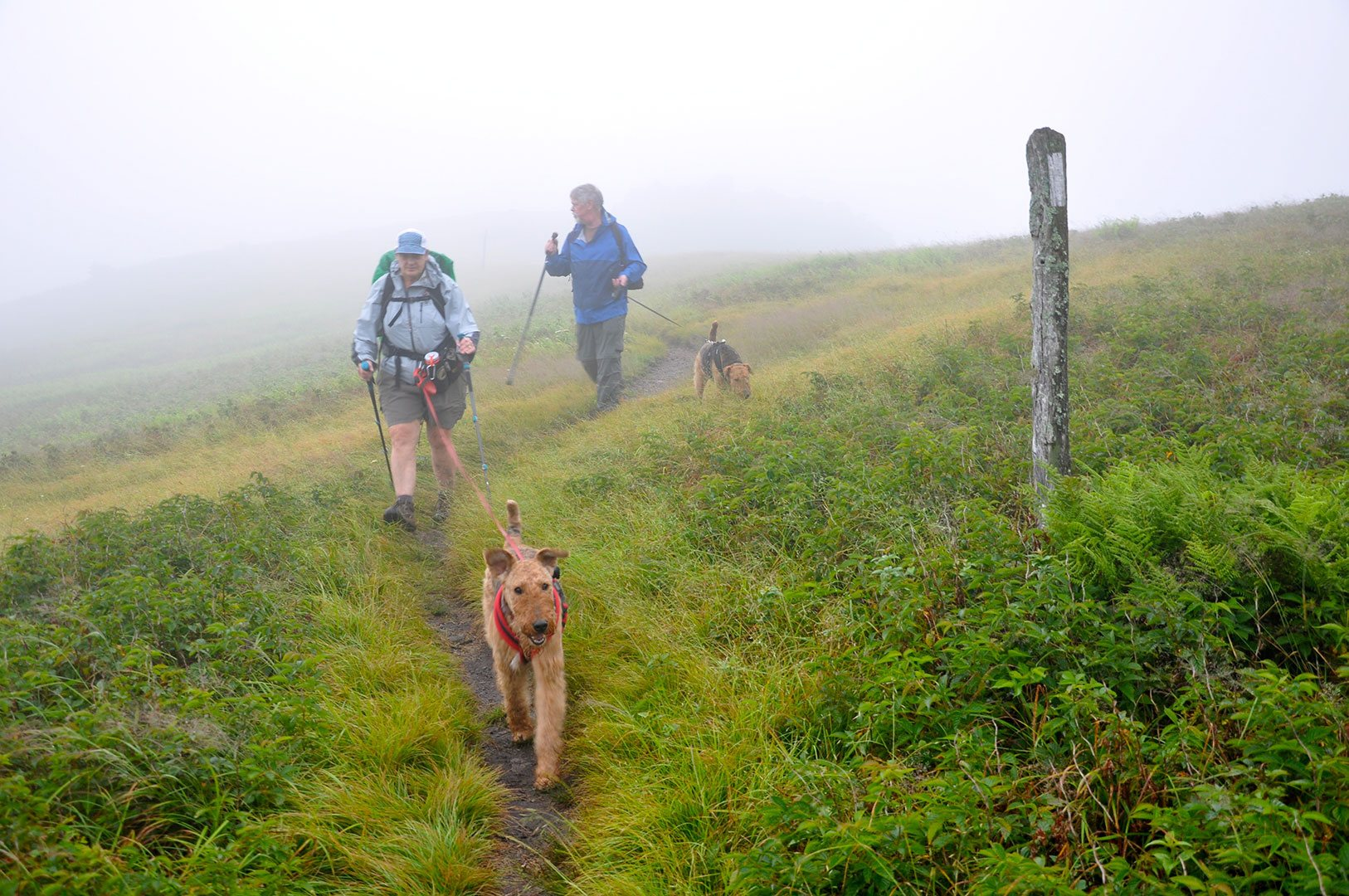 Hiking with Dogs in Mt. Rogers-Grayson Highlands